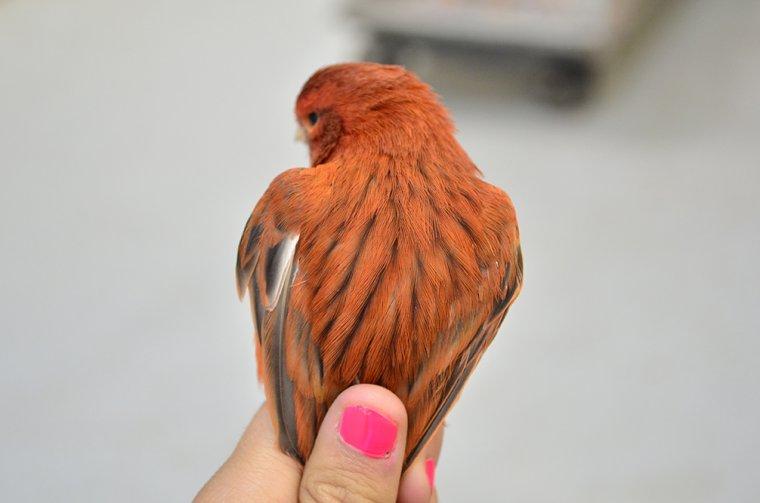 Certains de mes nouveaux oiseaux! :)