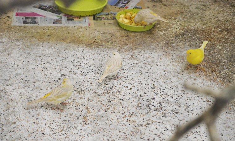 Mes oiseaux au repos :)