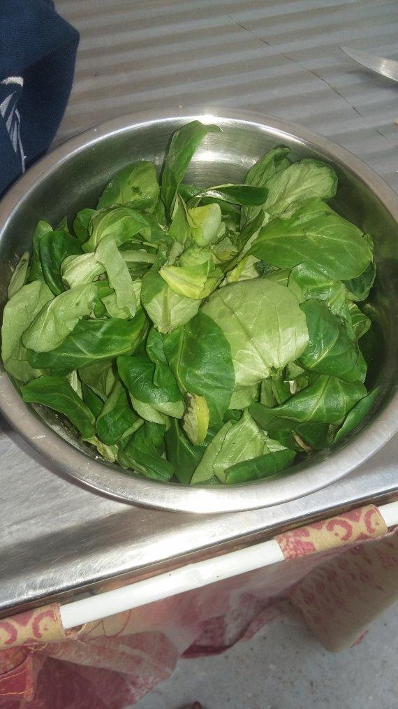 Salade pour les titis
