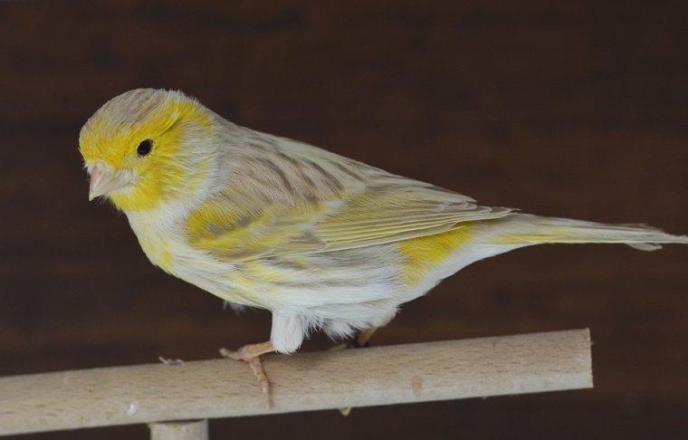 Les nouveaux oiseaux !!!!! <3