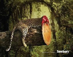 La déforestation et c'est ravages  , Parlons en !!