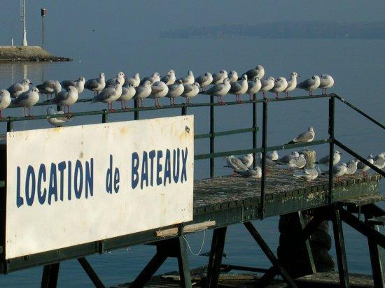 destination ile d oleron