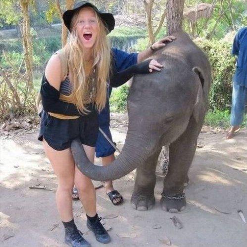 un elephant  sa trompe enorment hi