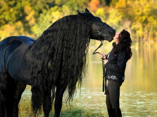 un amour de cheval  huuuuuuuu