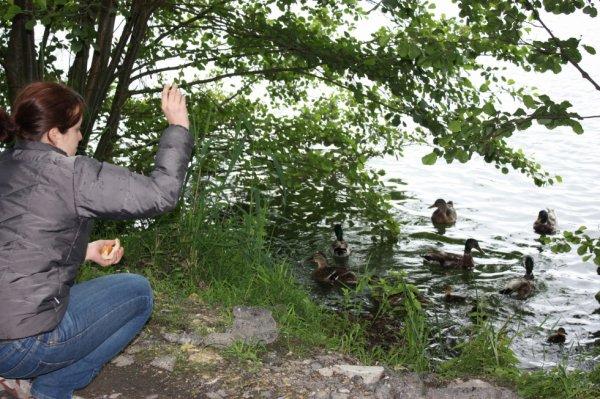 soso attire les canards un peu plus loin du poste    :-)