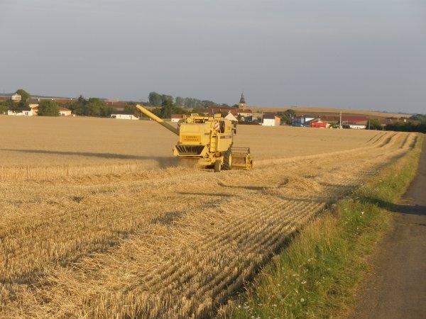 blé 2011.