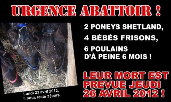 12 CHEVAUX PARTENT À L'ABATTOIR JEUDI MATIN...
