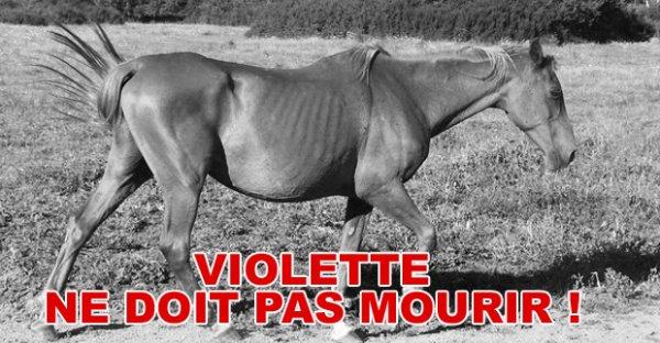 Violette - Article trouvé sur : www.ClicAnimaux.com