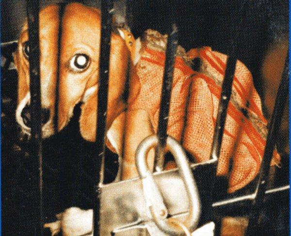 Collectif Contre L'Expérimentation et l'Exploitation l'Animale - Article trouvé sur www.ClicAnimaux.com