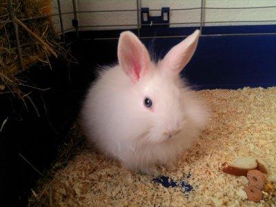 mon lapin, elle s apelle Beauté!!!!