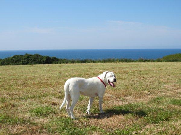 La belle à la veille de ses 9 ans à profiter d'un séjour en Bretagne