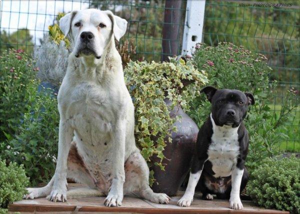 Mamie Tess (12ans1/2) et son copain staffie Amarock (10mois)