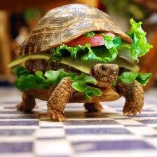 L'attaque des tortue