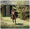 chemins-equestre