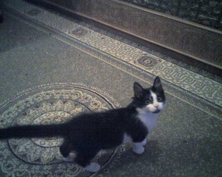 c'est mon chat