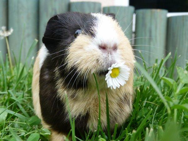 Article photos. - Le paradis de Pixelle c'est quand je la laisse en liberté dans l'herbe. ♥