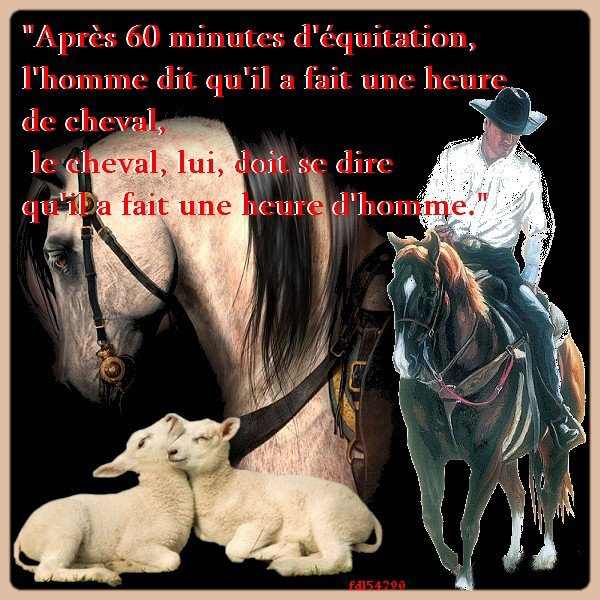 citation sur le cheval