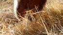 Photo de Horse-passion-02
