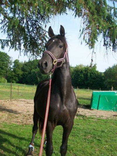 ✿ Pourquoi l'équitation ? Car dans l'équitation , nous avons le bonheur d'être deux . Mais de ne faire qu'un ! ✿