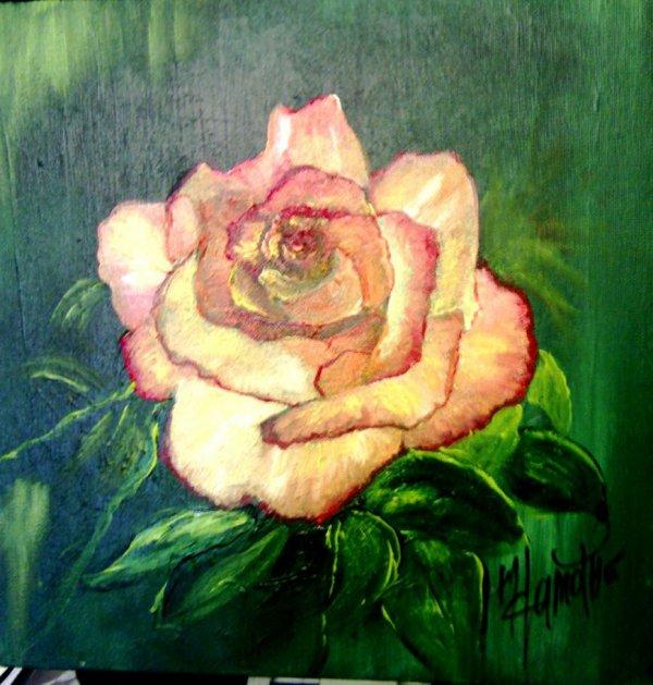 Rose tendre. Peinture à l'huile 30X30: 40 ¤