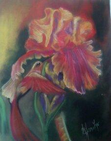 Colibri et iris