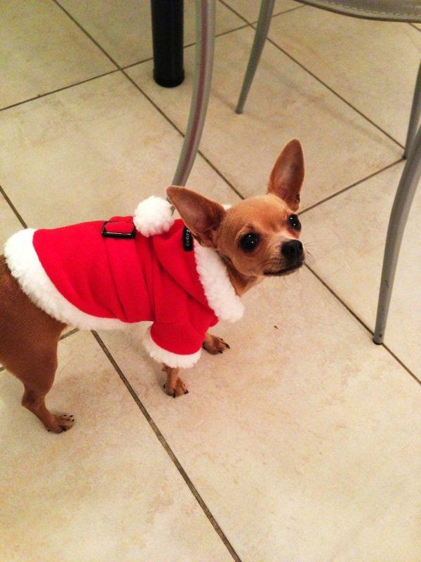 Ma kiki est prête pour Noël ! ❤