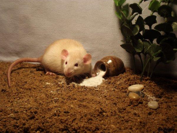 Liouba & Zafira (26.04.2012)