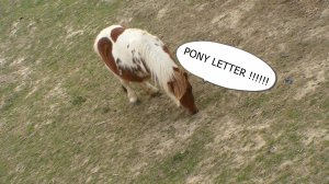 PONY LETTERS !!!!!