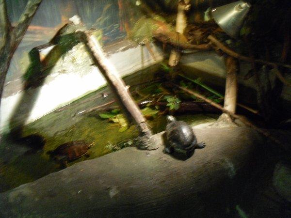 La salle des reptiles...