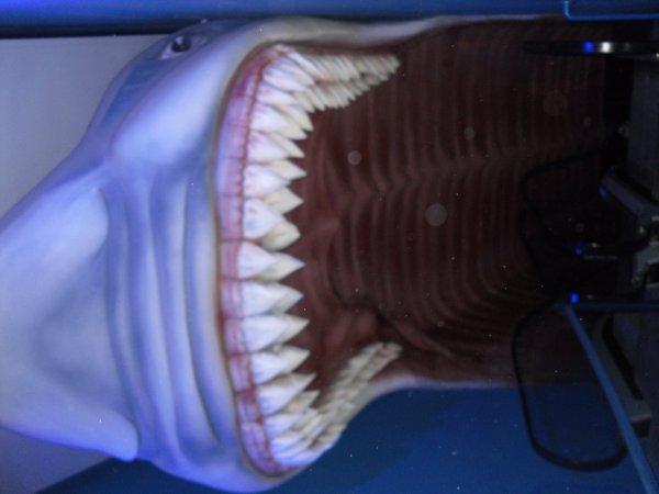 Descente vers la salle des requins et des tortues de mer...