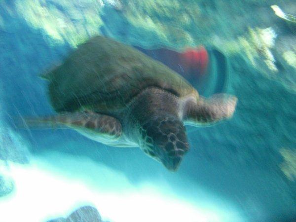 ... Fin de la visite à l'Aquatopia...