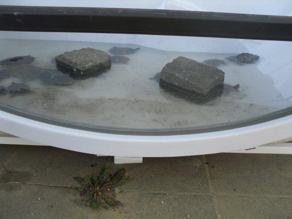 """Nouveau """"bac"""" pour les tortues avant de passer dans l'étang..."""