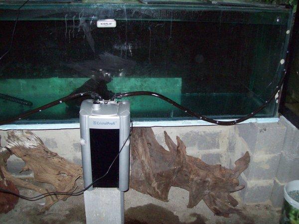 Quelques photos de l'aquarium de mes oscars vidé et nettoyé entièrement...