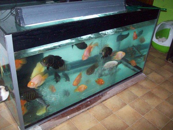 Scénario catastrophe... Le pied de l'aquarium à plié mais heureusement, il a été vidé à temps... Donc l'aquarium a été vidé et les poissons placé dans un autre provisoirement... Le temps que mon père vienne resouder et renforcer le pied d'origine d'ici un jour ou deux...