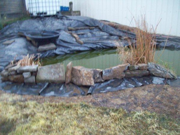 Suite de mon étang ( jardin )