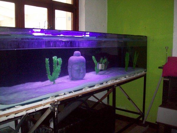 Mon aquarium de 1755 litres enfin réparé et rempli ;-)