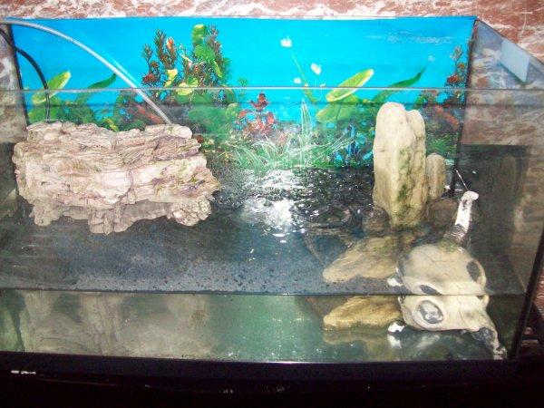 Aquarium improvisé pour ma tortue serpentina... Elle a grandit beaucoup plus vite que les autres...