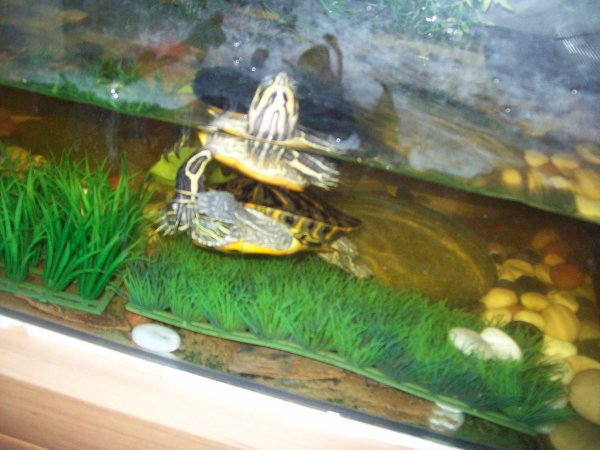 Les tortues de ma belle soeur Madi...