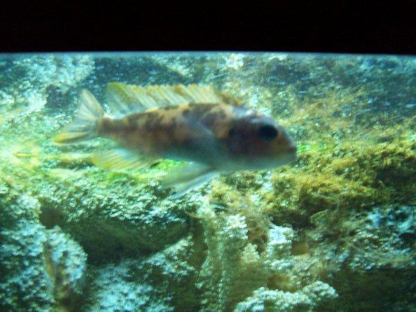 De retour à la maison, quelques photos de l'aqua que j'avais remis en route avec mes 3 cichlidés dedans...