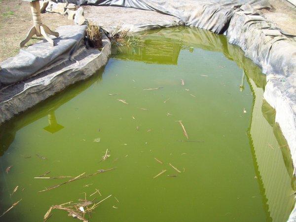 Petite catastrophe... Mes chiens ont fait tomber la bache de l'étang de 48000 Litres dedans et plus de la moitié de l'eau 'est infiltrée dans les terres... Prochainement, nous allons remédier à tout ça ;-)