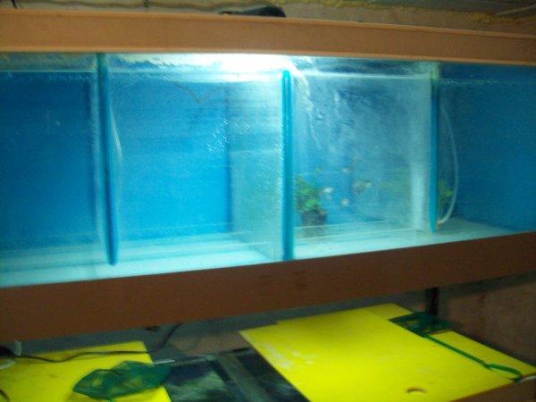 Nouveau rack en route avec au 2ème étage, les guppys de madame...