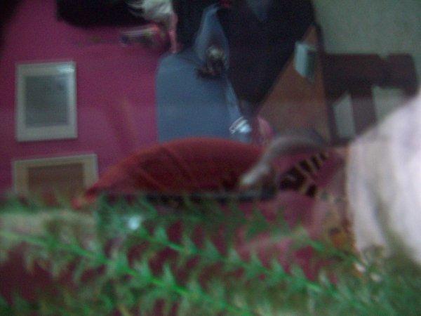 Mon nouveau poisson giraffe que ma belle soeur m'a offert pour mon annif... Très spécial...