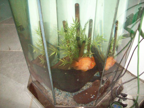 Mon aqua octogonal que j'ai placé chez lui pour qu'il puisse y mettre quelques poissons...
