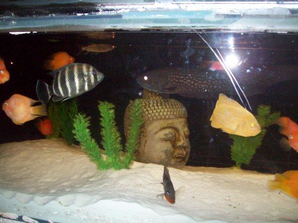 Quelques photos de ma pomuplation dans l'aqua de ma salle à manger...