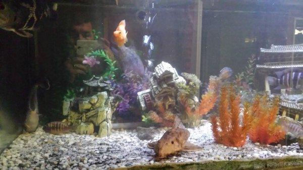Petit tour chez mon frère Steve avec ses poissons...