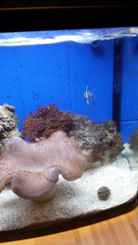Le petit aquarium d'eau de mer de ma belle soeur Madi ;-)
