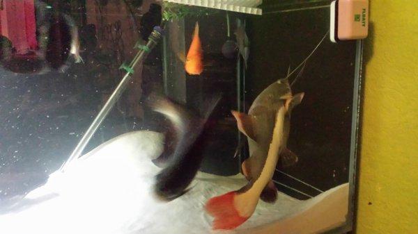 Quelques photos de mon aquarium...