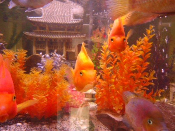 Quelques photos de l aquarium de mon petit frère Steve...