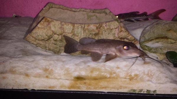 Quelques photos de mon petit aqua...