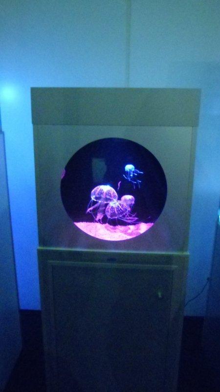 Futur projet mais dans un mon aqua de 1m80 de long sur 40cm de large et 1m40 de haut ;-)